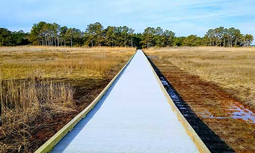 The Seahawk Trail at Holts Landing State Park