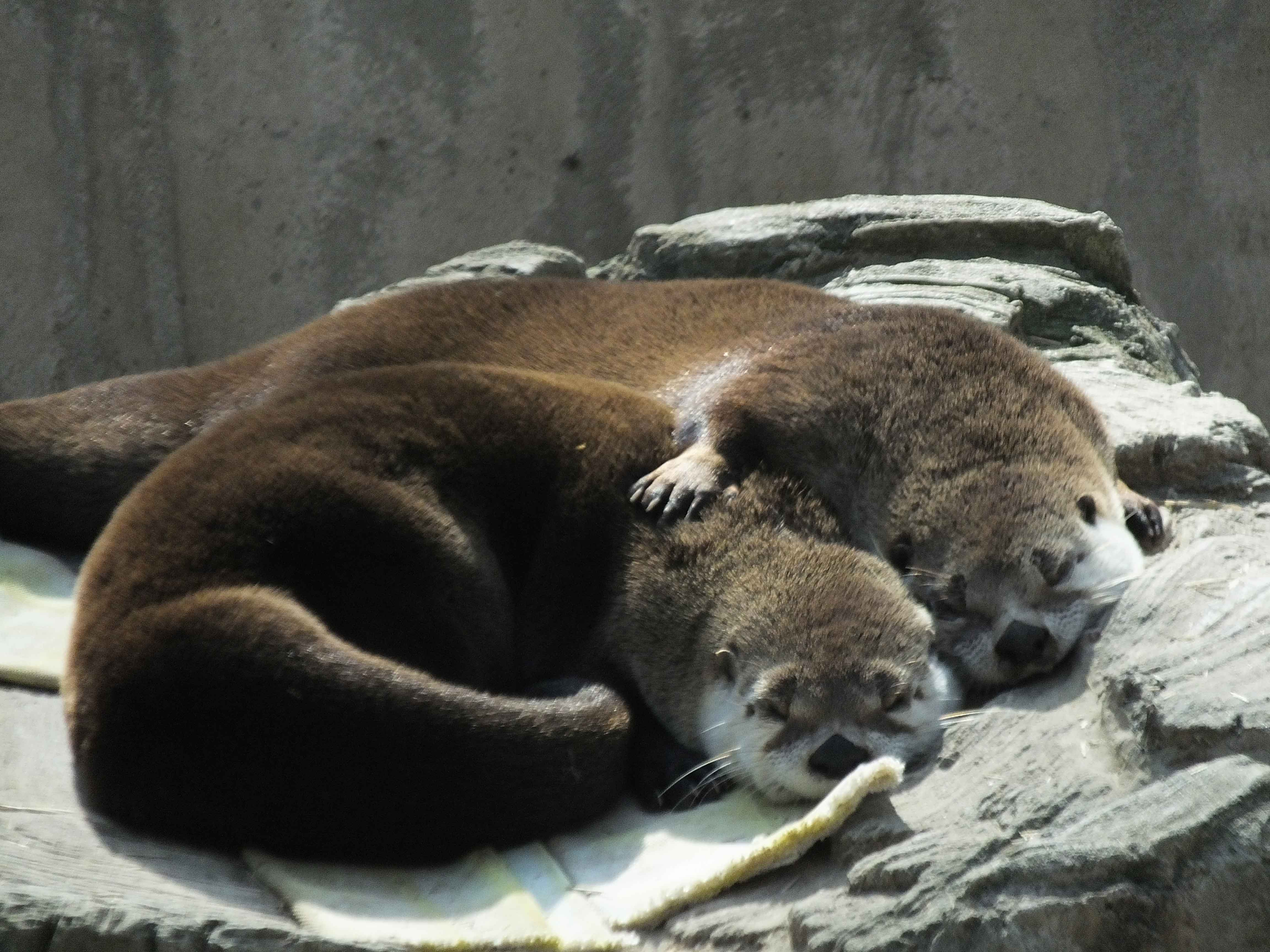 otters hugging