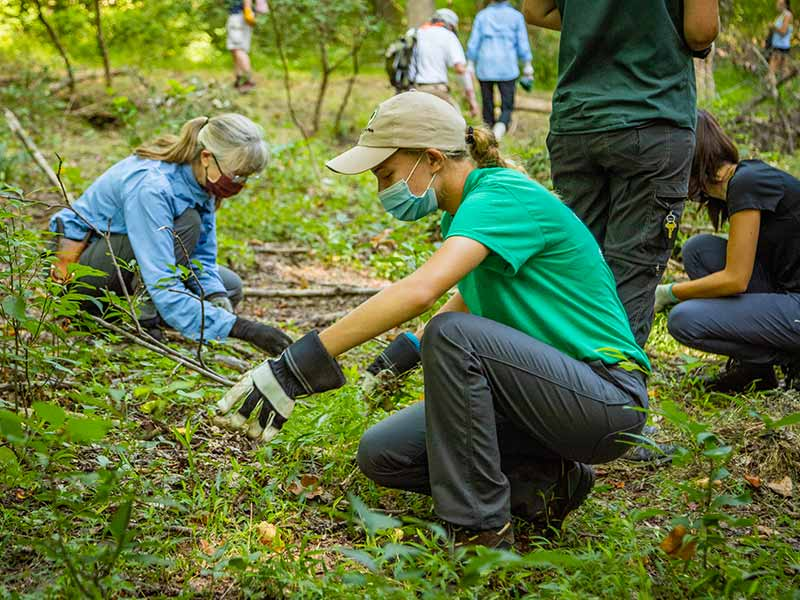 Youth Conservation Corps volunteers eradicating invasive species