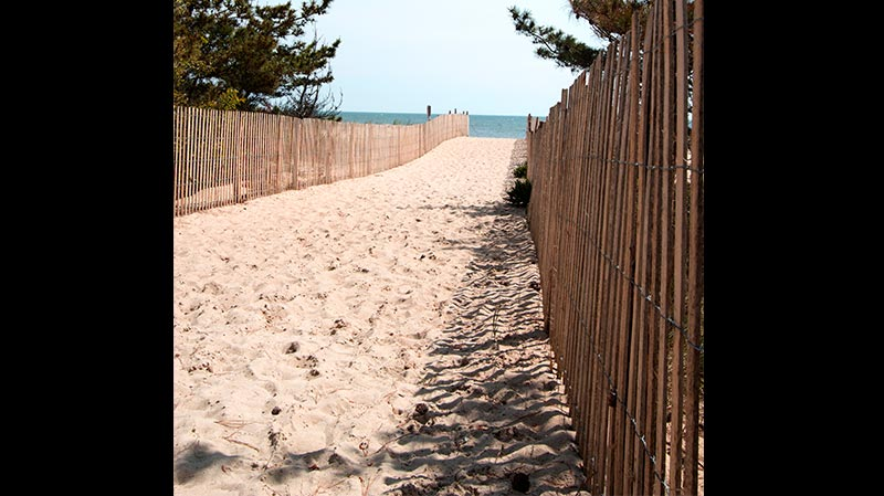 sand path leading to the beach
