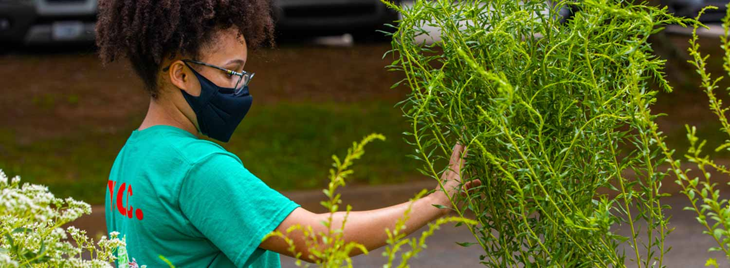 Teen volunteer tending to plants